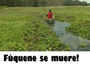 Foto: Campaña Cuatro ruegos por Fúquene - Hagamos Eco