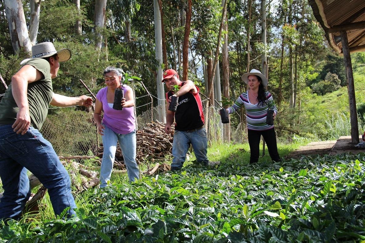 Imagen: FAO Colombia
