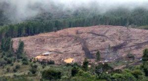 Foto: Veeduría Ambiental Duitama