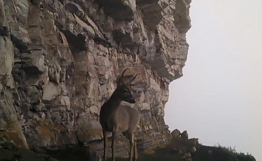 Foto: Parques Nacionales