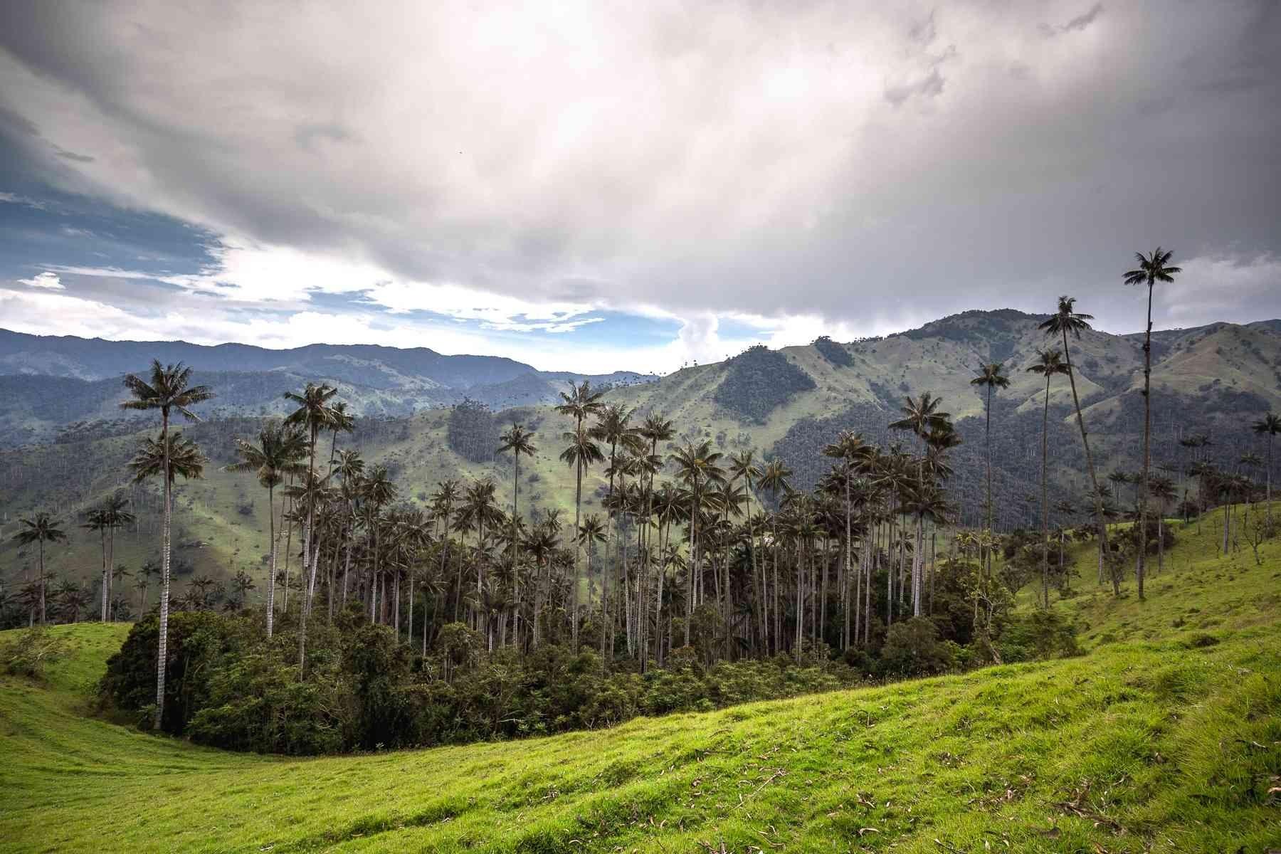 Foto: Felipe Villegas (Instituto Humboldt).